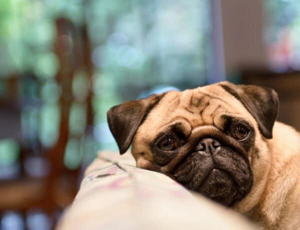 Számít, hogy mit néz a kutya a tévében? Meglepődhetsz a válaszon!