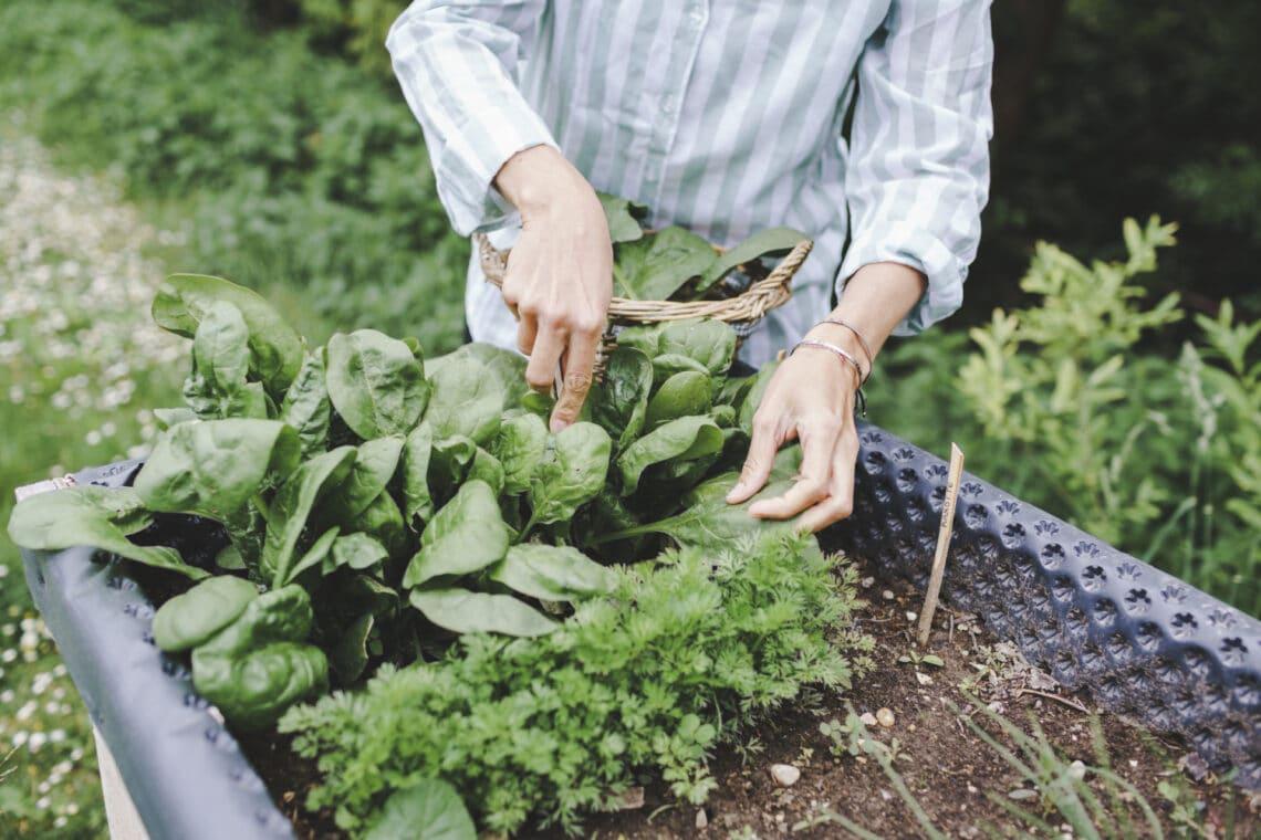 5 ok, amiért igazi gyógyír a kertészkedés