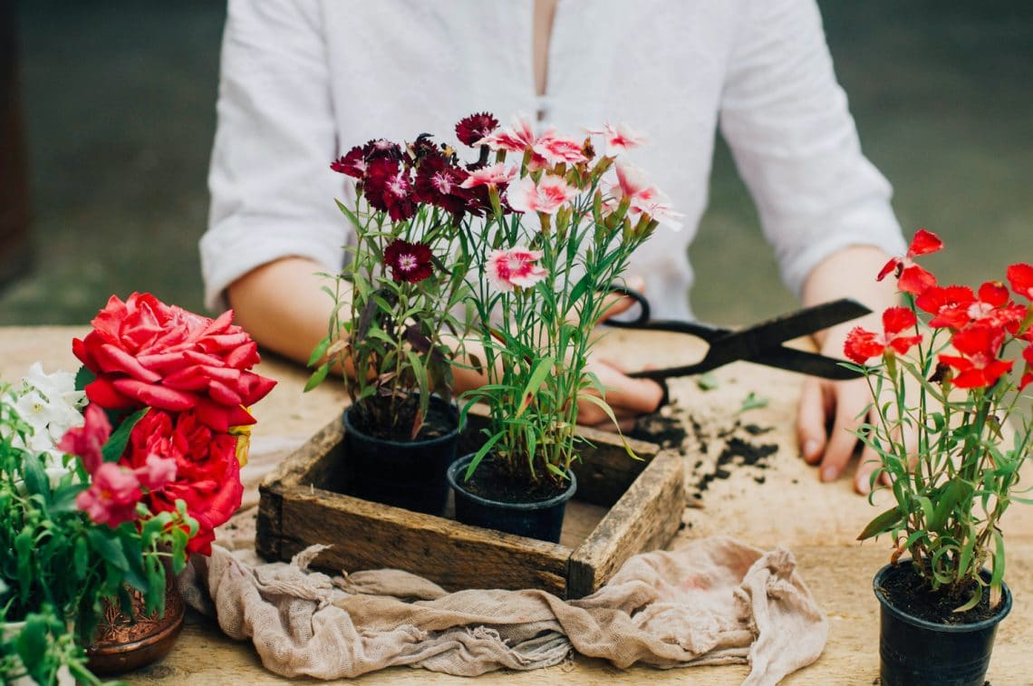 7 veszélyes növény, ami a te kertedben is ott rejtőzhet