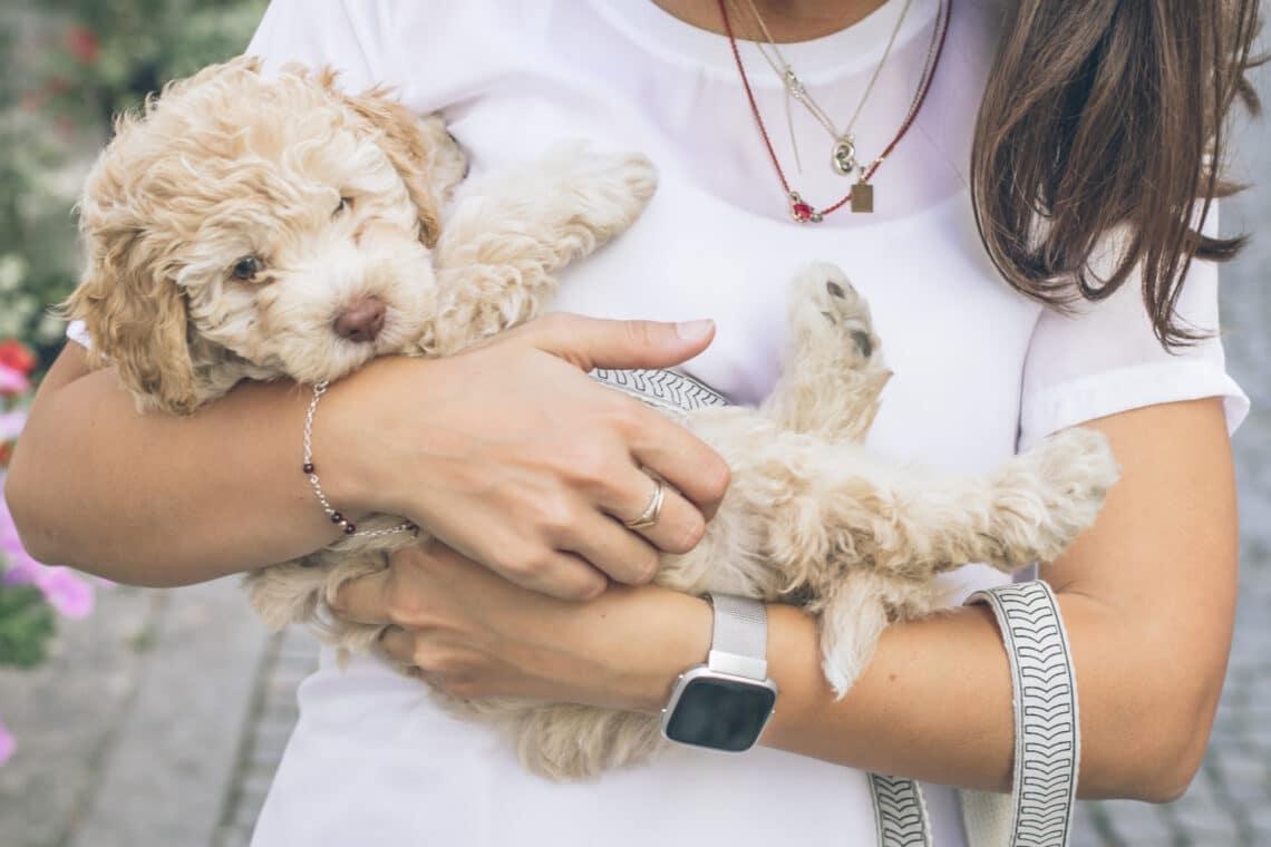 Mennyi idős a kutyád? Egy friss kutatás szerint nem héttel kell szorozni az évek számát