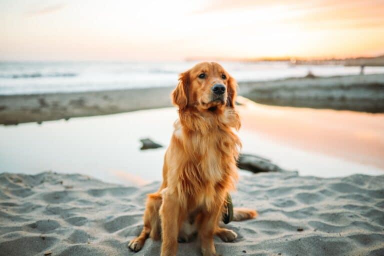 Ha kutyákkal álmodsz