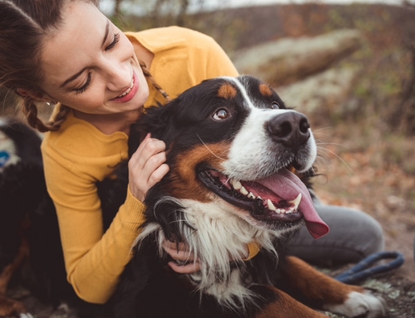 10 megdöbbentő tény a kutyákról, amitől biztos leesik az állad