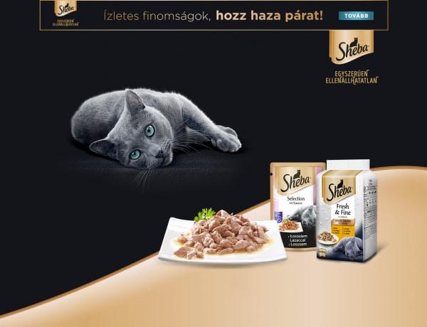 Flódni cica minőségellenőrzési munkát vállal: Így ízlett neki a 6 féle cicaétel, szerintem