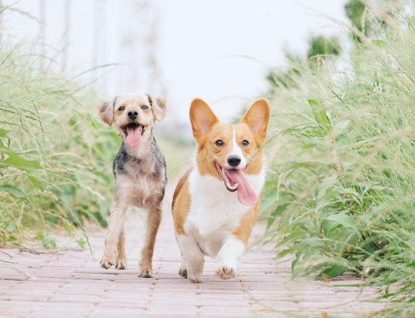 A kérdés, amire sosem gondoltál: vannak jobb és bal mancsos kutyák?