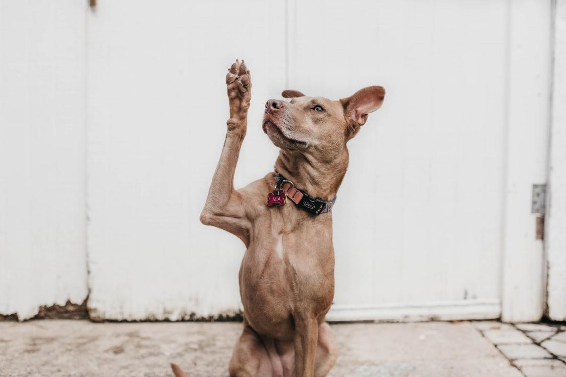 A kutyakiképzés 10 legnagyobb hibája
