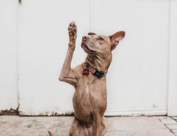 Ez a kutyakiképzés 10 legnagyobb hibája