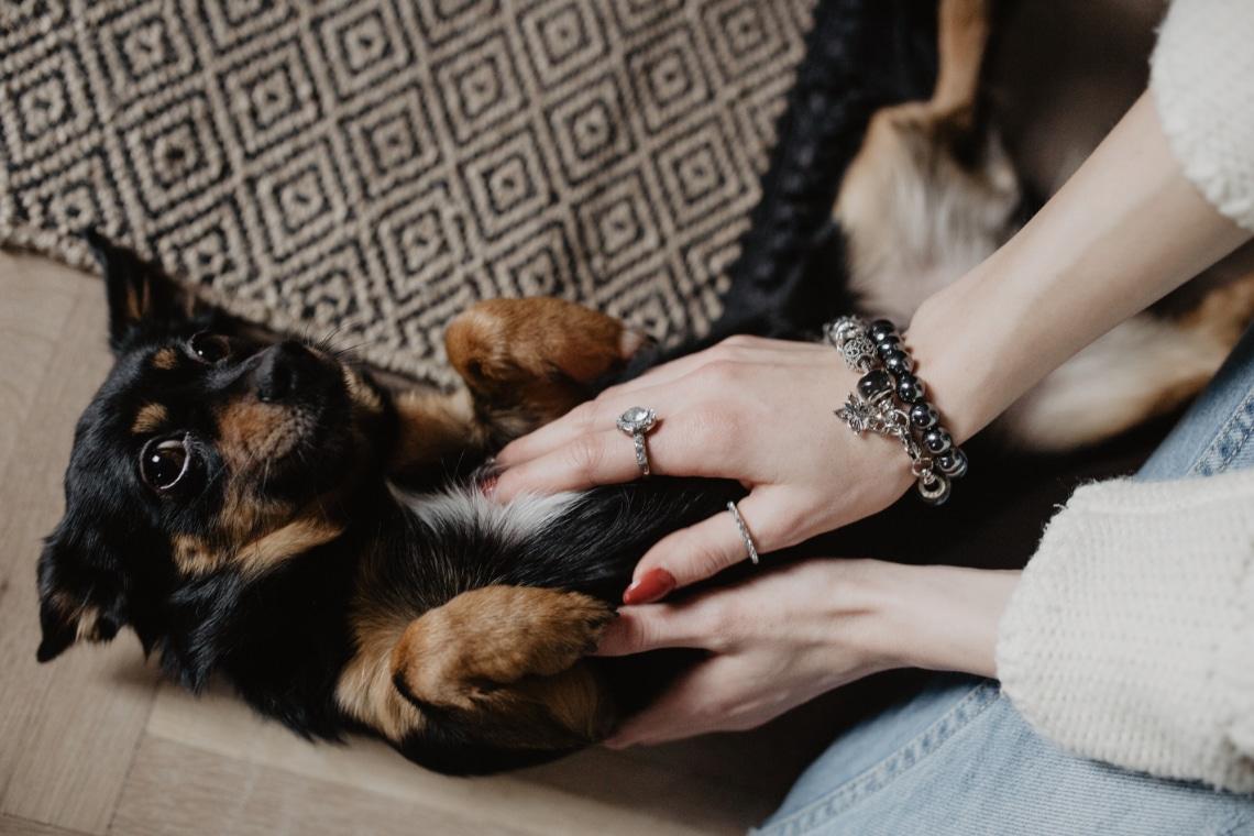 Első hónapom kutyagazdiként – tanulságok, amiket levontam magamnak