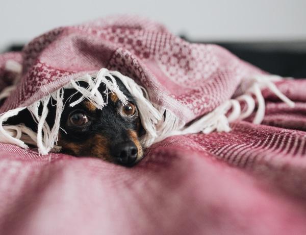 Az ok, amiért a kutyák félnek a vihartól: így segíthetsz neki megnyugodni pár egyszerű trükkel