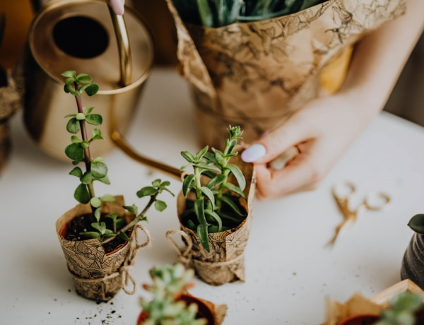 Ritkán kell öntözni és mégis gyönyörű! 7 igénytelen szobanövény