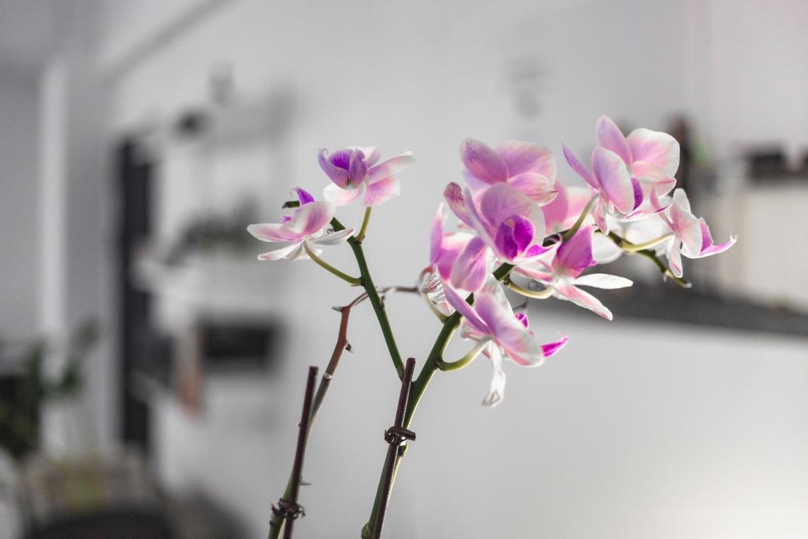 Így gondozd az orchideát, hogy sokáig szép maradjon