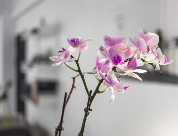 Így gondozd az orchideádat, hogy sokáig szép maradjon