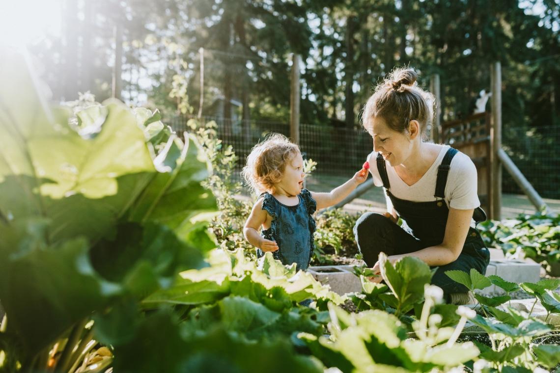 Az évelő mezőgazdaság lehet az élelmiszertermelés jövője