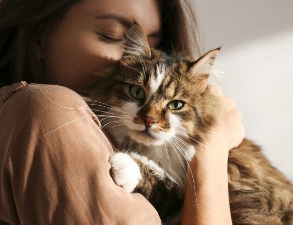 5 típusa van a macskás gazdáknak – Te melyik csoportba tartozol?