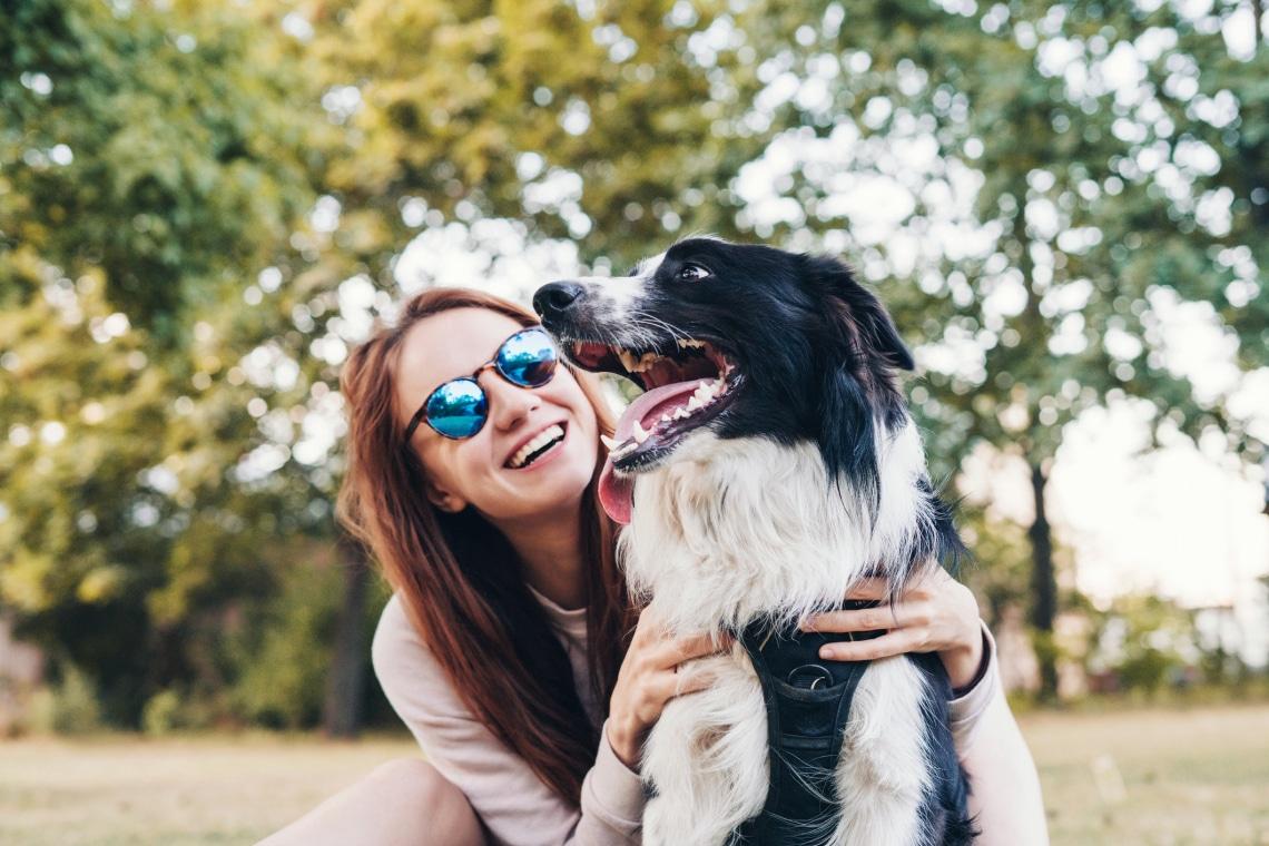 Ezek a legkönnyebben és legnehezebben idomítható kutyafajták