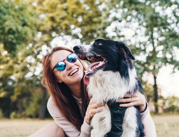 Ezek a legkönnyebben és legnehezebben idomítható fajtatiszta kutyák