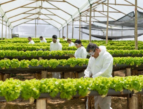 A hidroponikus és a vertikális gazdálkodás lehet a kiút az előttünk álló élelmiszerválságból