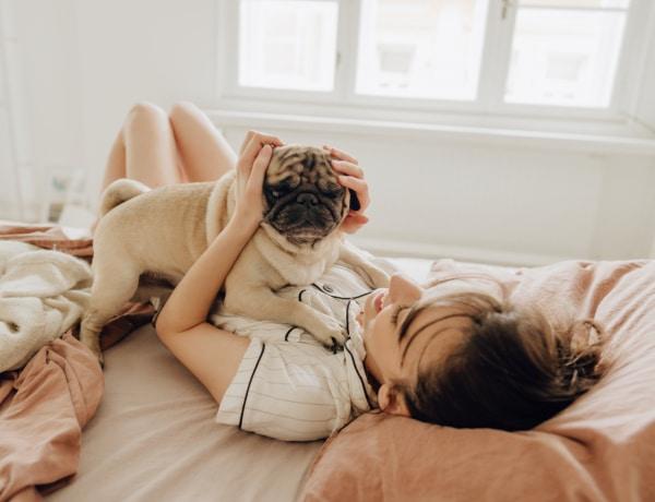 A legcsendesebb kutyafajták – ha nem házőrzőt szeretnél