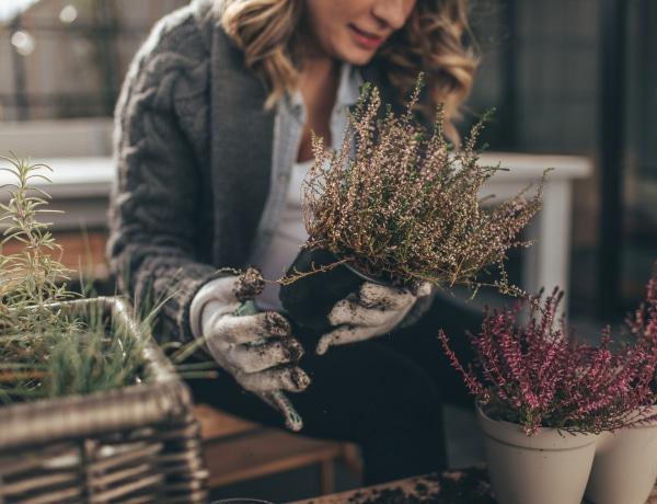 A legszebb őszi kültéri virágok, akár balkonra is