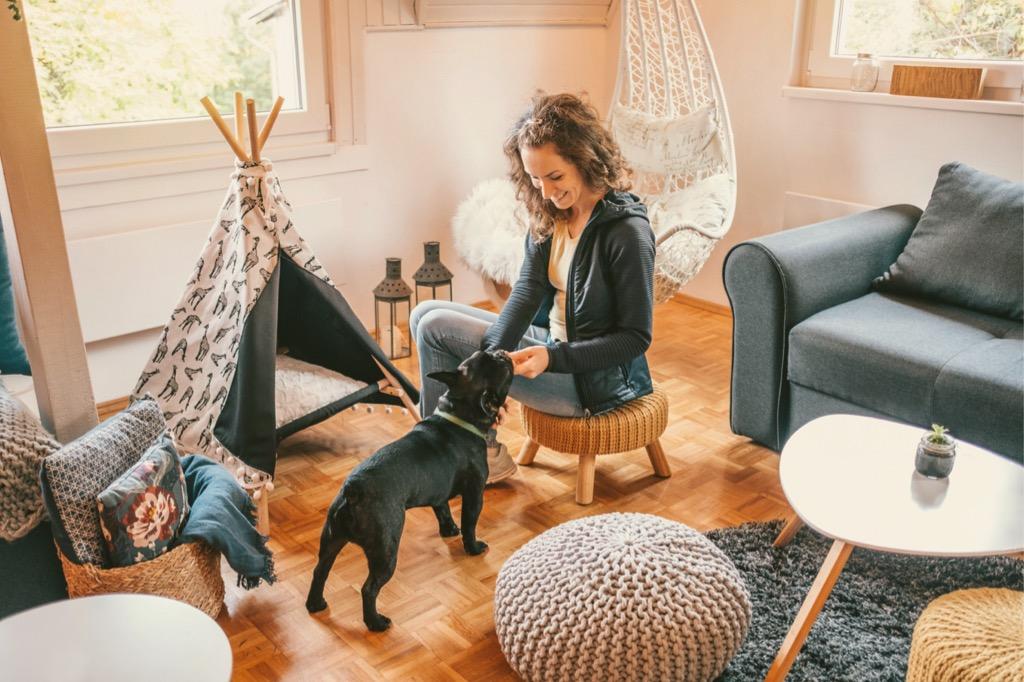 4 dekoratív kutya részleg a lakásban