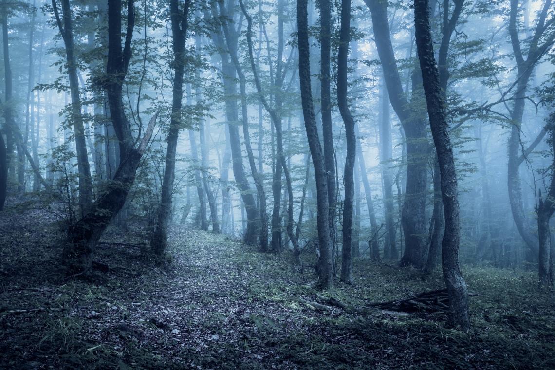 5 igaz történet, ami félelmetesebb, mint bármelyik horrorfilm