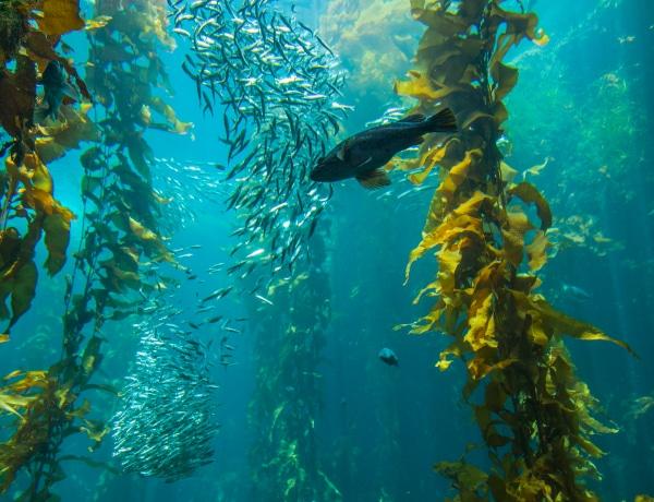 Az erdő, ami 8 ezer kilométerre a tengerben nő: lenyűgöző látványt nyújt