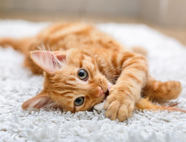 Ezért különlegesek a vörös macskák, a tudomány szerint is