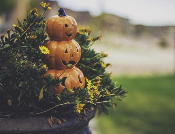 Ezek a csodaszép, őszi konténerkertek minden bejáratot feldobnak