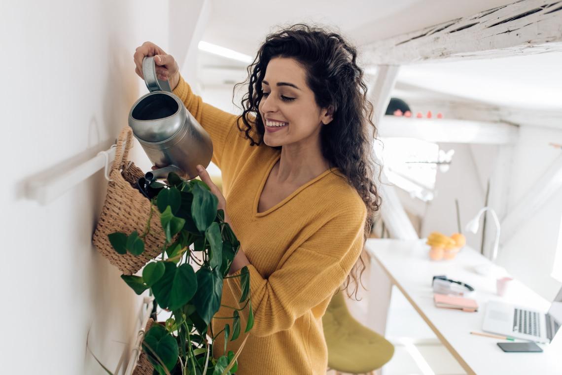 Karantén idején: Segítenek a szobanövények a mentális egészség javításában