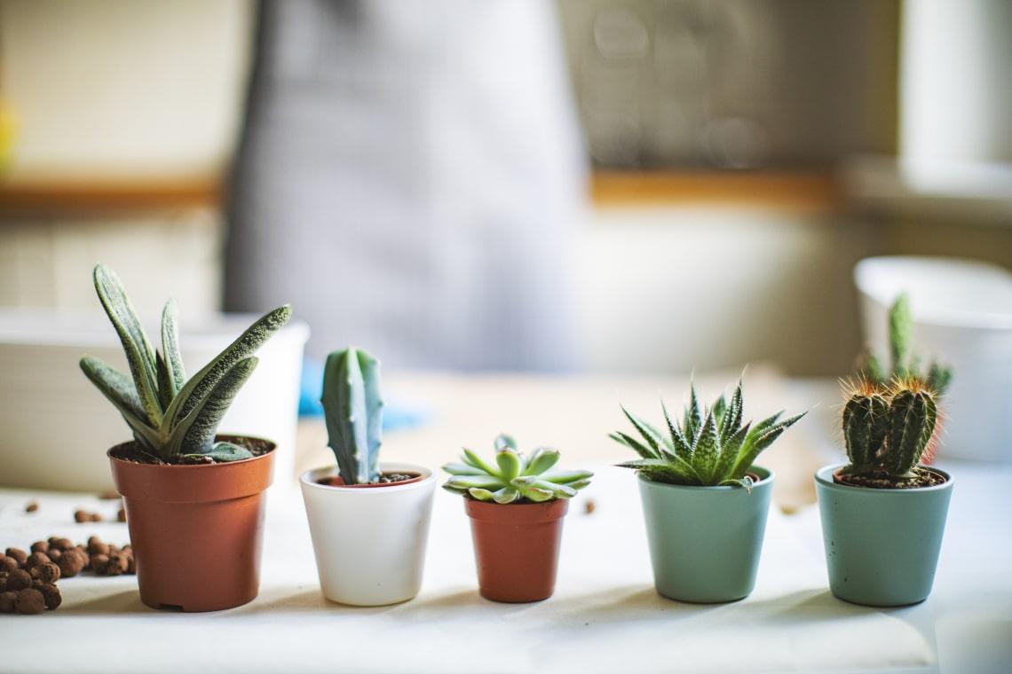 Ezek a szobanövények ideálisak apró lakásokba
