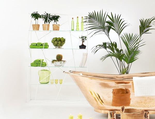 5 gyönyörű szobanövény, amivel feldobhatod a sötétebb helyiségeket
