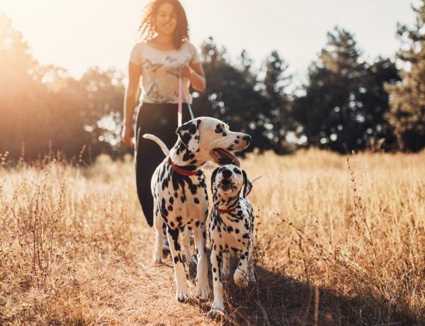 Ez a 10 legrosszabb kutyafajta kisgyerekes családok számára