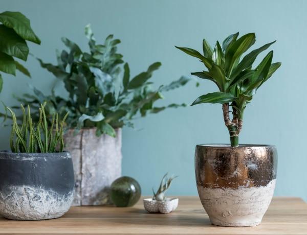 5 szürreális szobanövény, amin mindenki elcsodálkozik