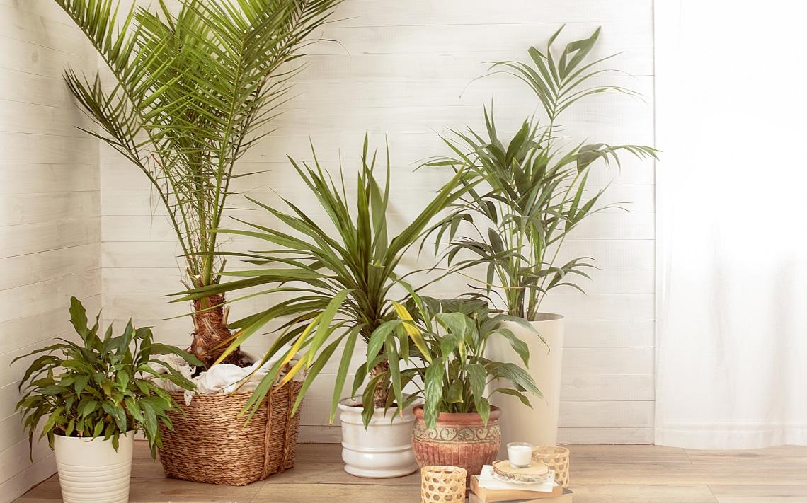 Ezzel a pofonegyszerű Ikeás hackkel boldogabbá teheted a kicsi szobanövényeid
