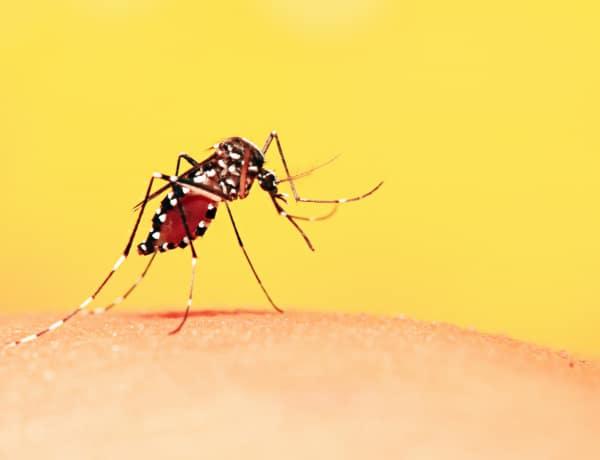 A rovar, ami évente 1 millió embert öl meg