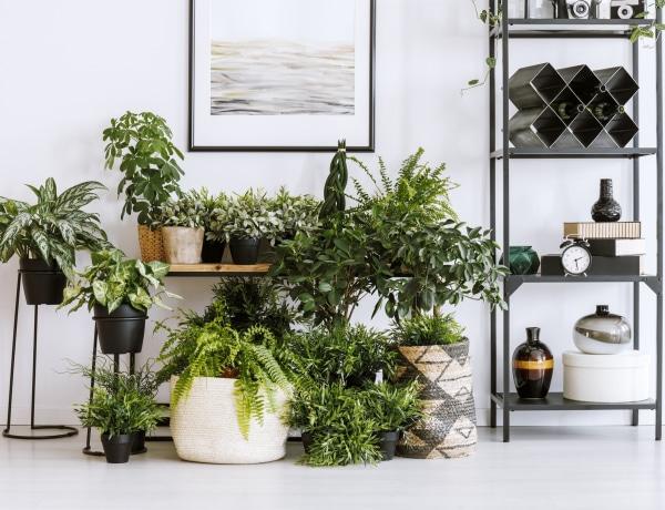 Kiderült, mi lett 2021 növénye: tuti, hogy te is akarsz majd egyet otthonra