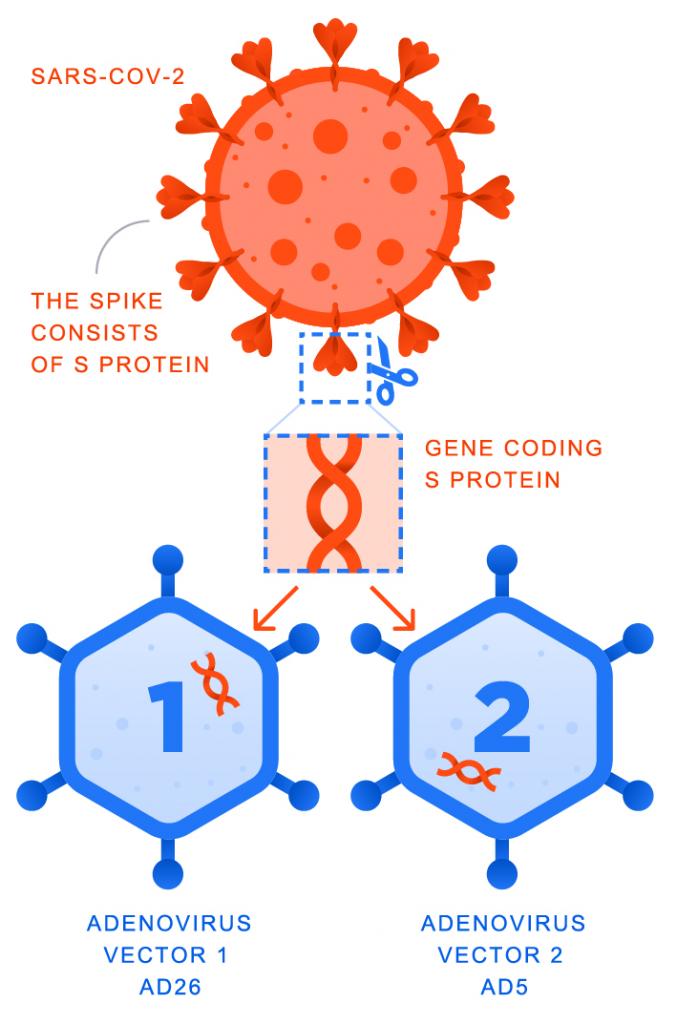 SputnyikV vakcina működése