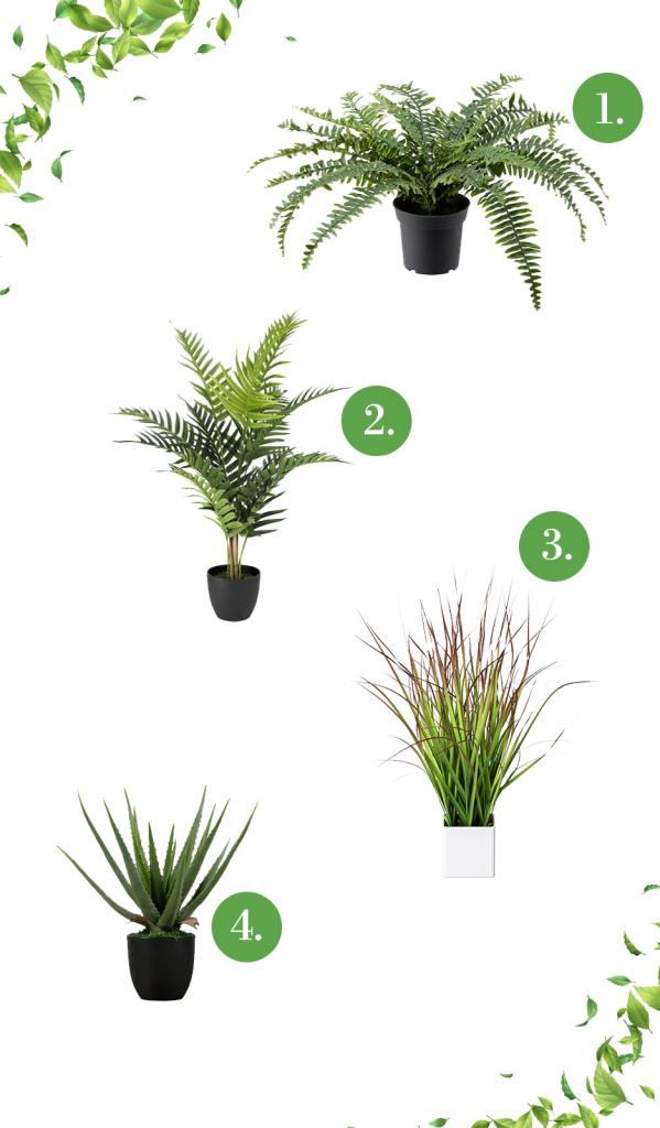 Közepes méretű leveles műnövények