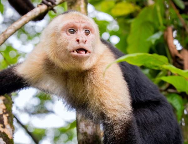 Nicole Kidman alpakát tart, Justin Bieber majmot. 10 híresség, egzotikus háziállattal