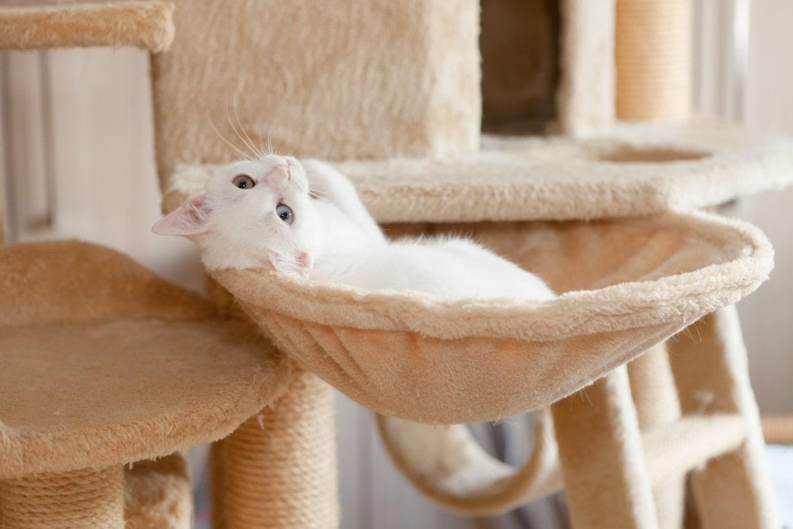 Macskakuckó ötletek, avagy miért imádják annyira a macskák a dobozokat?