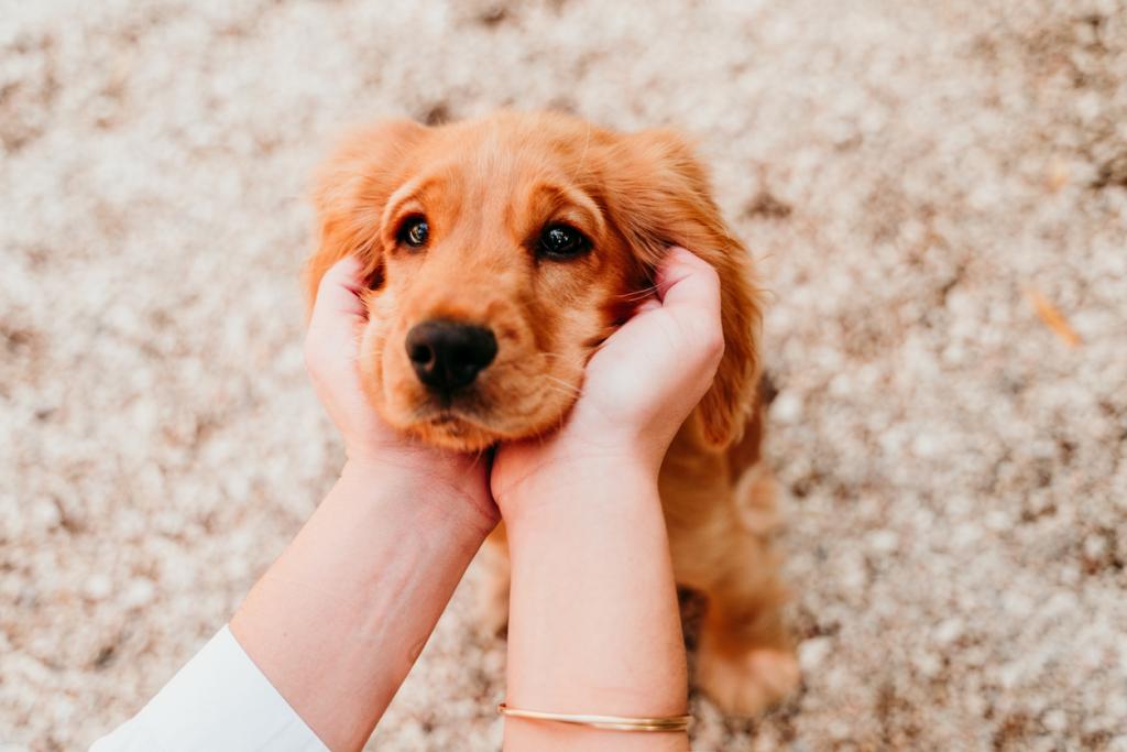 Kutya arcának simogatása