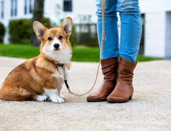 10 kisméretű kutyafajta, ha szeretnéd, hogy örökre kölyöknek nézzen ki