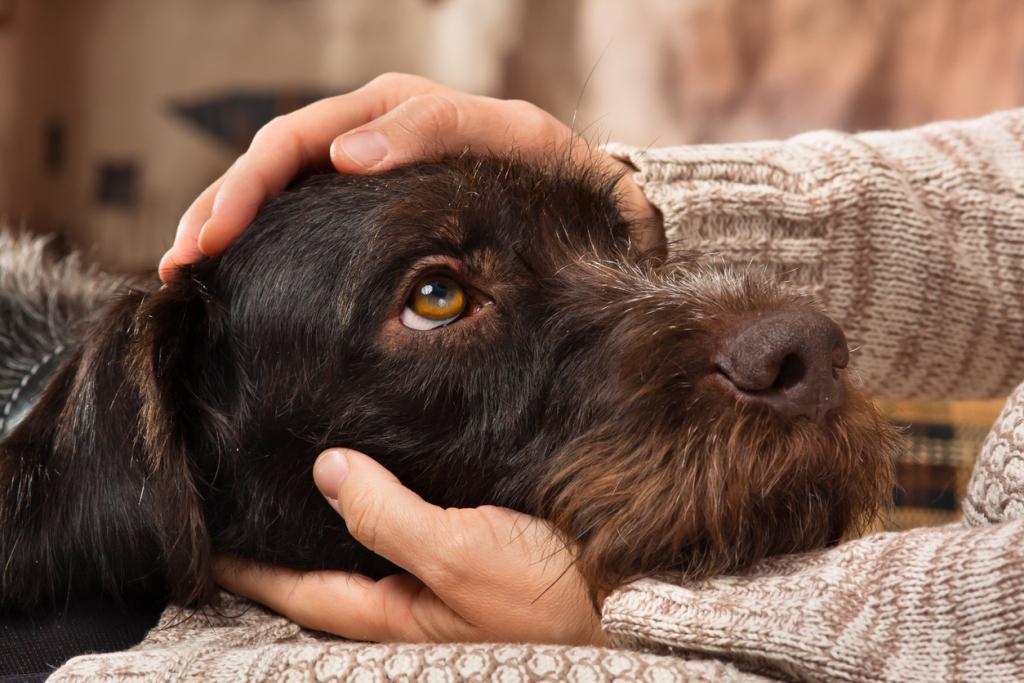 Kutya szemkontaktus okai