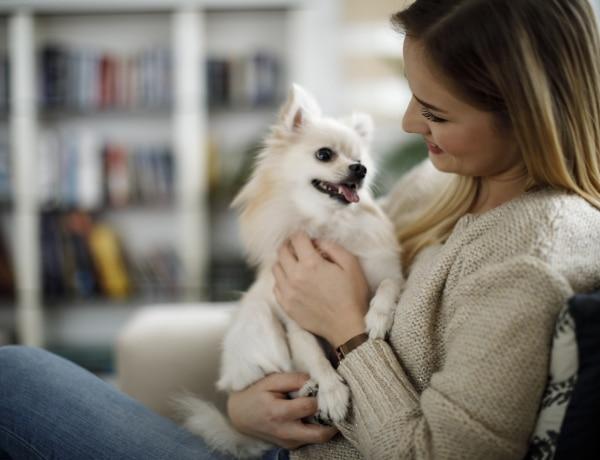 Miért bámul a kutyád? Utána jártunk!