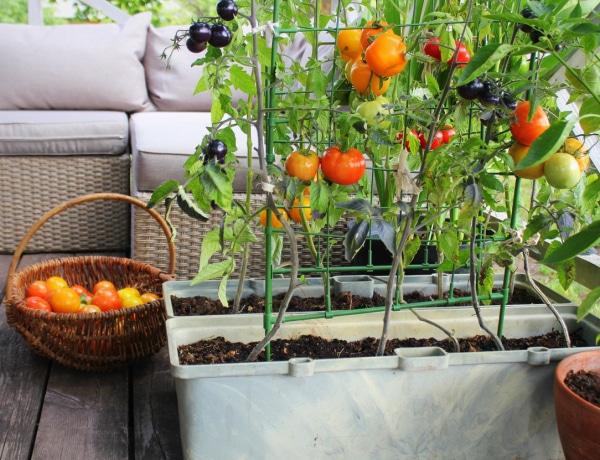 Mit ültessek a konyhakertembe? A leghasznosabb növények