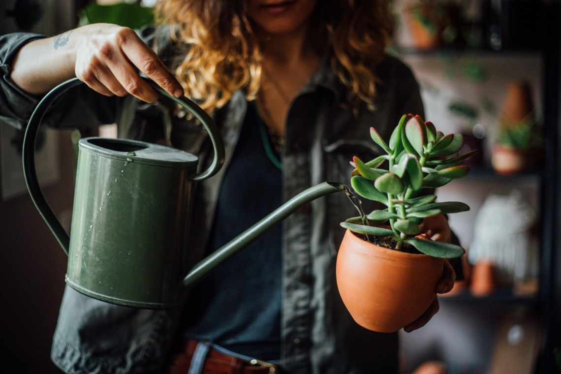 5 igénytelen, mégis csodaszép szobanövény, ami mindent túlél