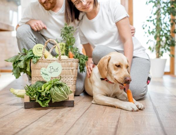 Légy te a kutyád dietetikusa! 5 táplálékkiegészítő, amire szüksége van