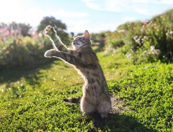 Túl sokat vadászik a macskád? Így szoktasd le róla