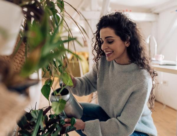 7+1 szerencsehozó növény, aminek ott a helye a lakásodban