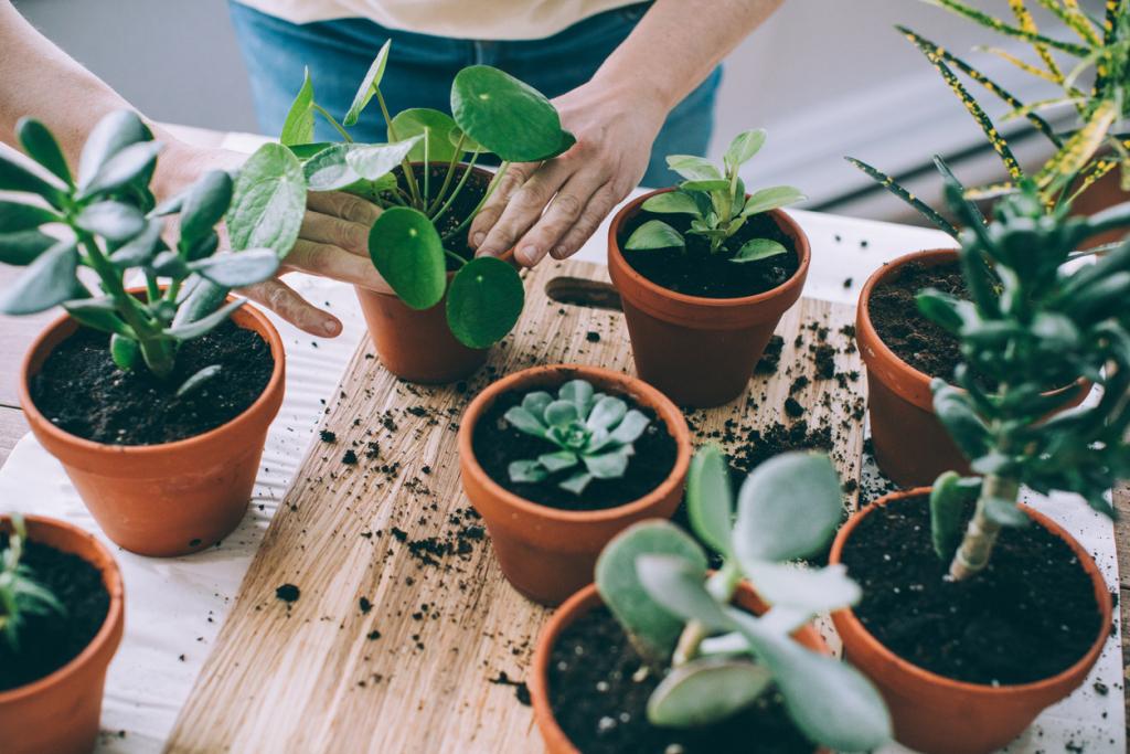 Szobanövény ültetése