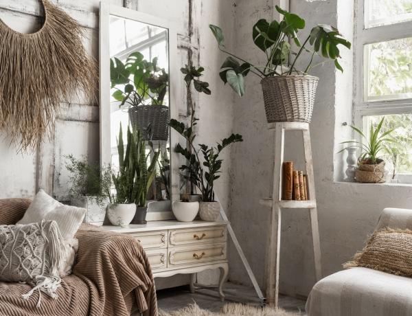 A 7 leggyorsabban növő szobanövény, ha lakásdzsungelt szeretnél